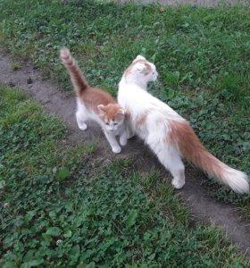 Котенок рыжий - белый