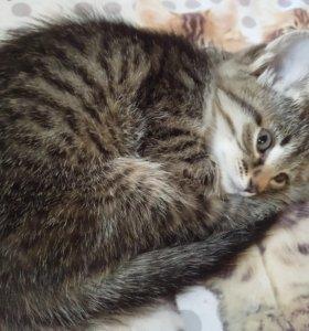 Котята ласковые