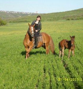 Конные прогулки, верховая езда