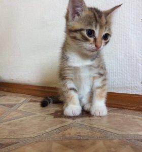Котёнок 2 мес.