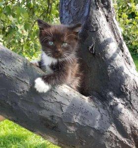 дачные котята мальчики 5 недель