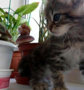 Необычная тигровая кошечка