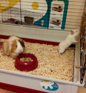 Клетка Ferplast для кроликов/морских свинок