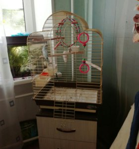 Клетка большая и волнистый попугай