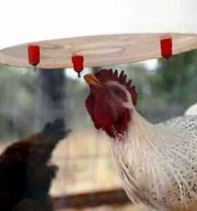 Поилки для домашней птицы