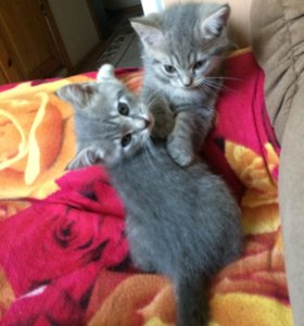 Котята в хорошие руки , мальчик и девочка