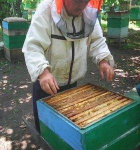 Продаю мед, натуральный с собственной пассики.