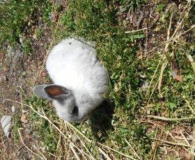 продаю карликовых кроликов