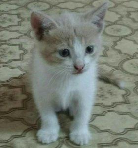 Котята двухмесячные