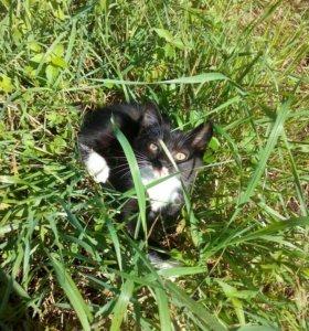 Отдам мирового кота доброму хозяину