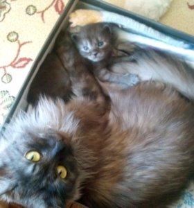 Котята в добрые руки,родились 4 августа
