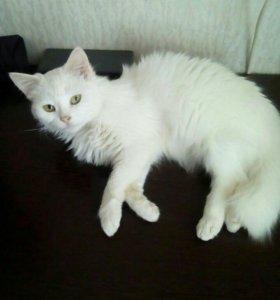 Кошка 1,5 года