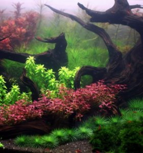 Сайдекс sidex чистая вода от водорослей