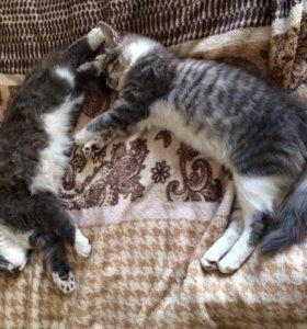 В добрые руки котики