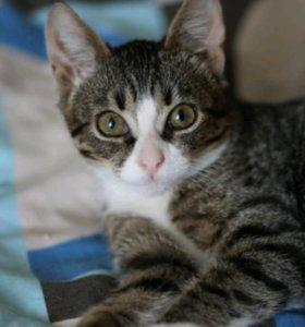 Самый ласковый котенок
