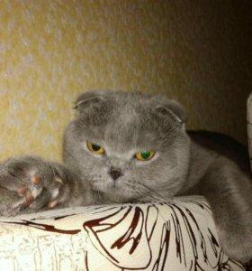 Случка котика