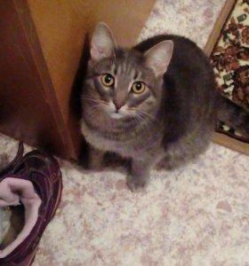 Продам домашнего кастрированого кота