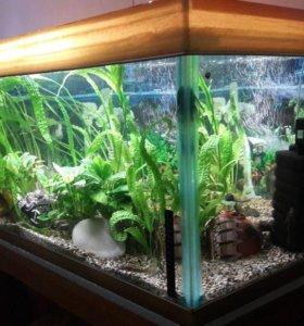 аквариумы и черепашники