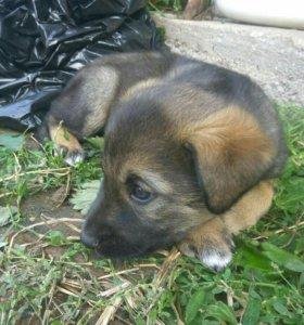 Бесплатно щенок девочка 1,5 месяца