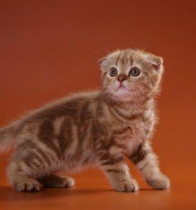 Котёнок редкого окраса