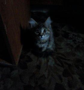 Кошечка.