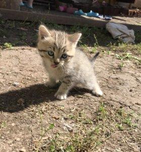 Котята, бесплатно, в добрые руки