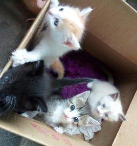 Кошечки