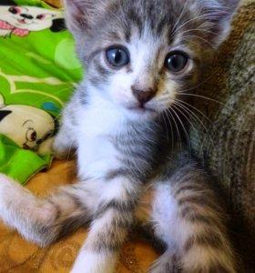 Отдам очаровательного котёночка в добрые руки