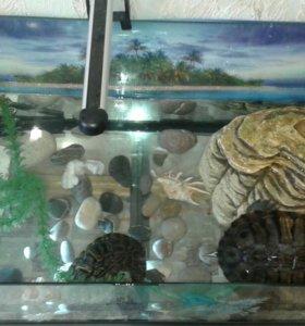 Черепахи и акватерариум