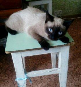 Сиамский кот + тарелочки и лоток