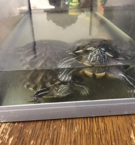 Черепахи с аквариумом