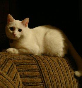 Кошка Герда в добрые руки
