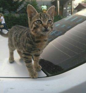 Очень нежная и ласковая девочка-котенок