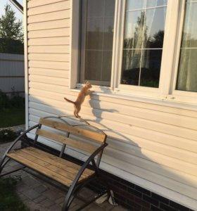 Котята, приносящие счастье в дом!