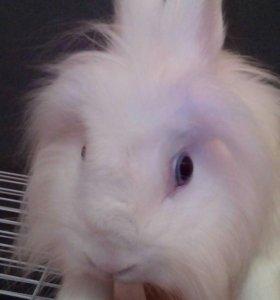 Вязка(кролик)