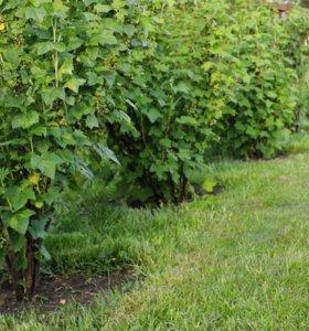 саженцы садовых растений