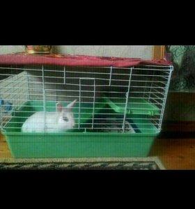 Клетка для домашнего  карликового кролика