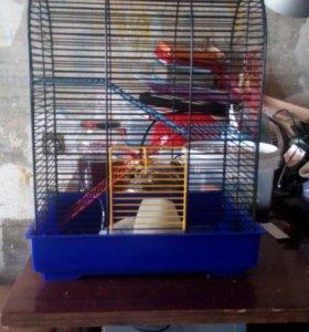 Клетка для крыс