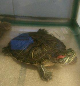 Продам аквариум с черепахой