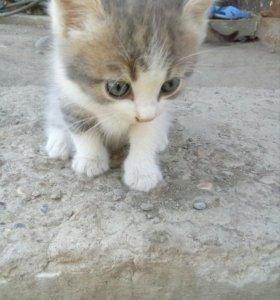 Котёнок бесплатный