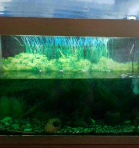 Продаётся аквариум!