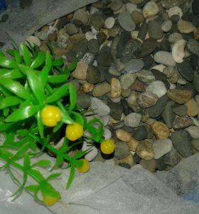 Камушки для аквариума