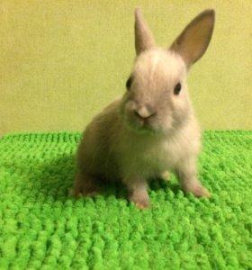 Ручной кролик (девочка)