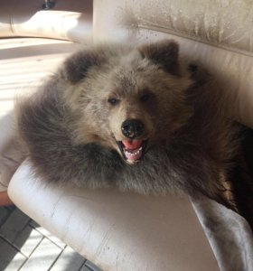 Медвежья шкура (ковёр)