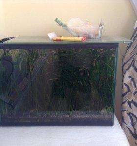 Аквариум с рыбками и помпой-аэратором