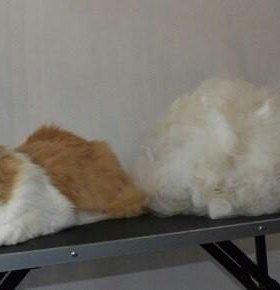 Стрижка,вычесывание кошек