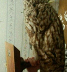 Искусственная сова