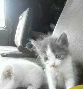 Подать бесплатное объявление о продаже кошки продажа земли для бизнеса в москве
