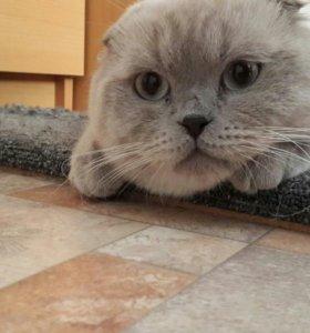 Взрослый котик