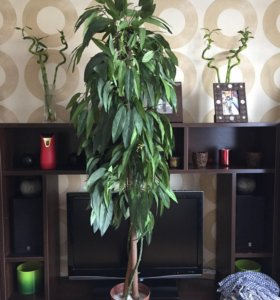 Искусственное дерево для офиса,дачи,дома.